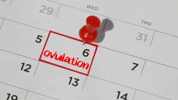 jak poznat ovulaci