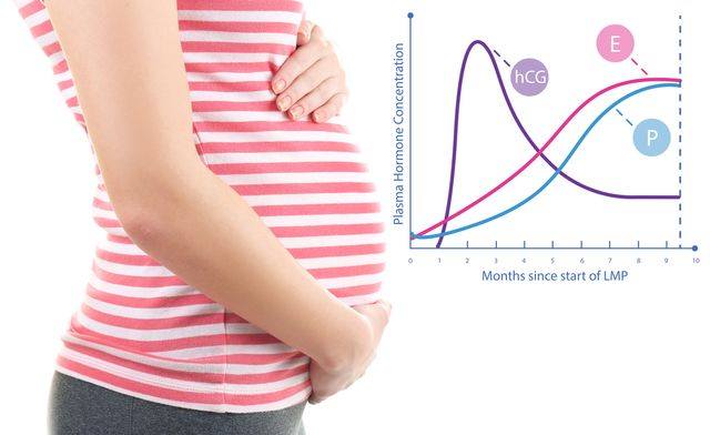 Těhotenský hormon hCG